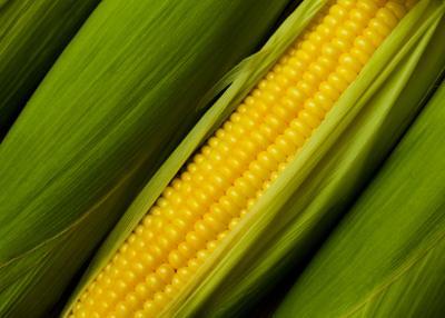 Fresh Raw Organic Corn...Yummmy!